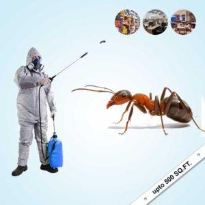 Ant Control Service in Villas
